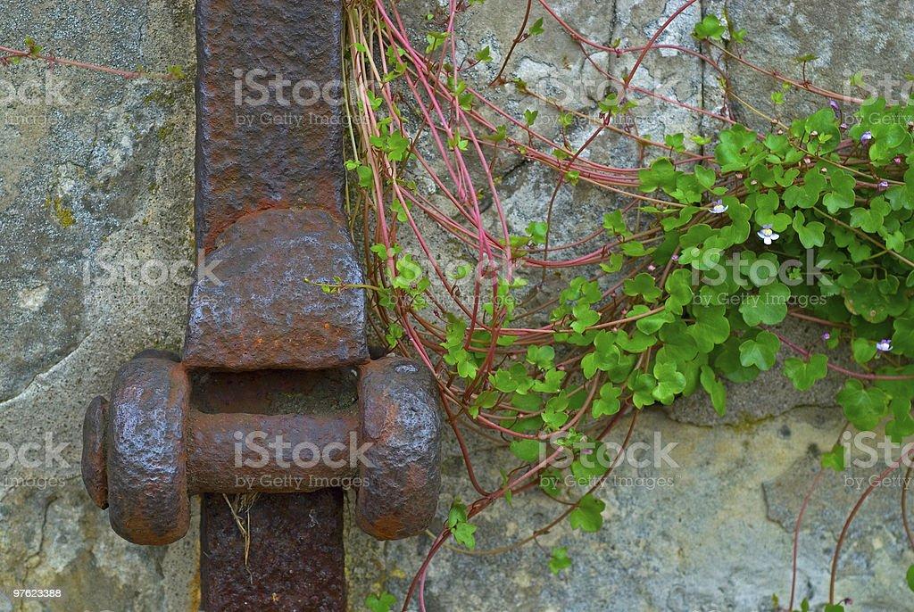 Fleur et fer forgé sur un quai mur photo libre de droits