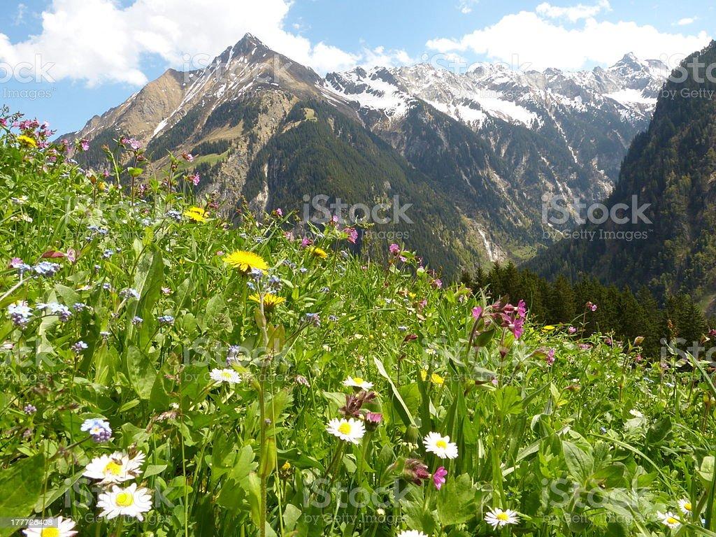 Blumen und Kräuter Wiese in den Alpen – Foto