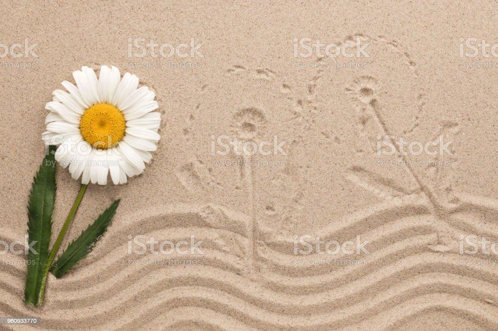 Blume und Impressum von Wiesenblumen auf dem Sand. Konzeptbild. - Lizenzfrei Baumblüte Stock-Foto