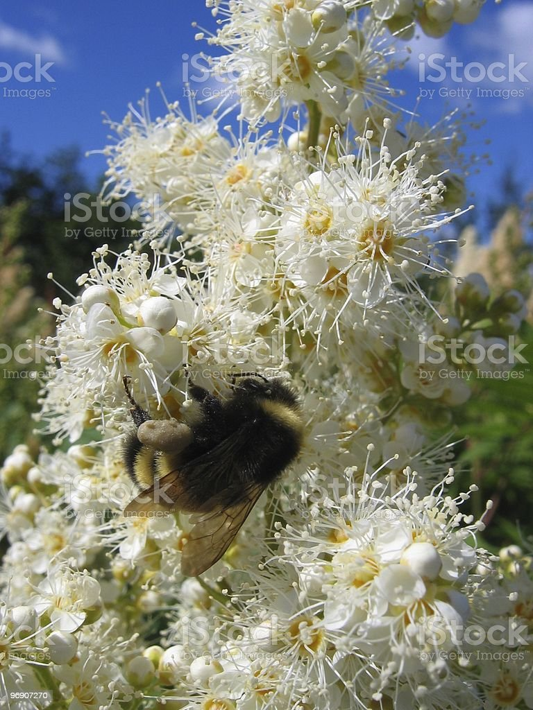 Flower and insect royalty-free stock photo