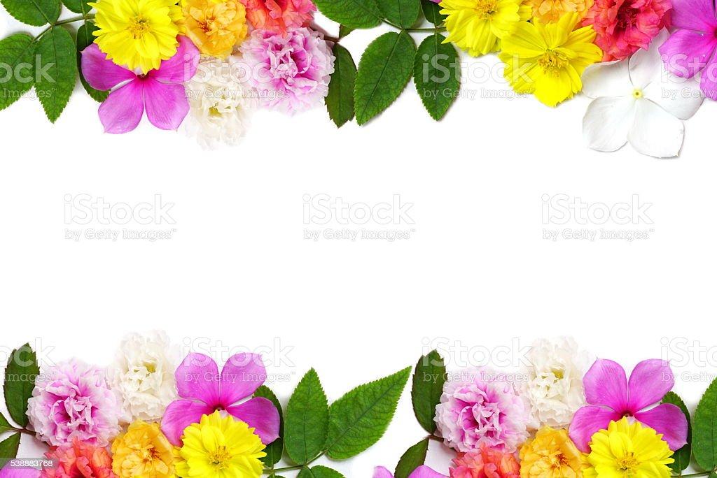 Blumen und Blätter Rahmen isoliert auf einem weißen Hintergrund – Foto