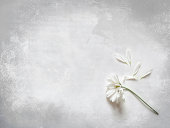 istock Flower and loose petals - She loves me not.... 170620018