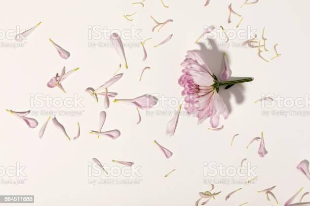 Flower and petals on white background picture id864511688?b=1&k=6&m=864511688&s=612x612&h=jzjddbcdzwbv5kfxkxvo9ahyuspk1kccdugebifvuto=