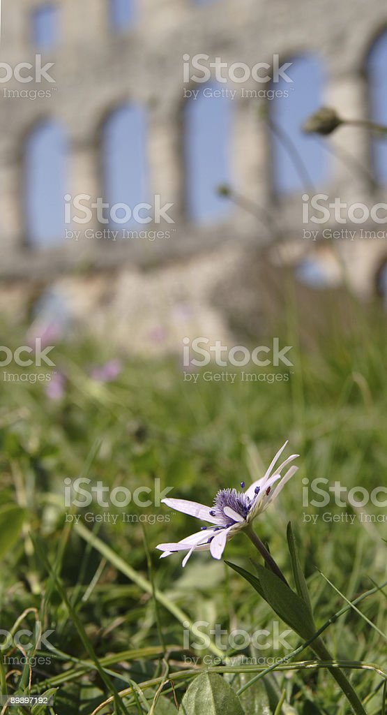Blumen und einige Geschichte Lizenzfreies stock-foto