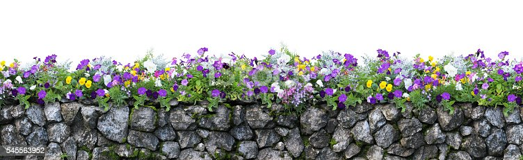 istock Flower and stone fence isolated on white background 545563952
