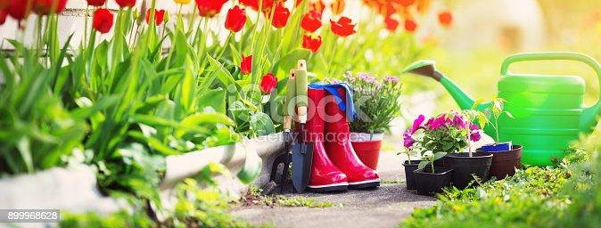 istock flower and vegetable seedlings growing in the garden 899968628