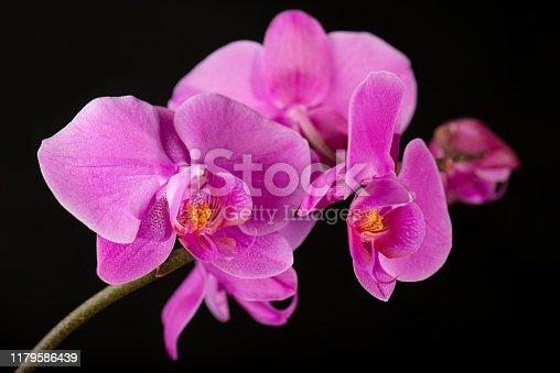 Flower arrangement of orchids on dark background.