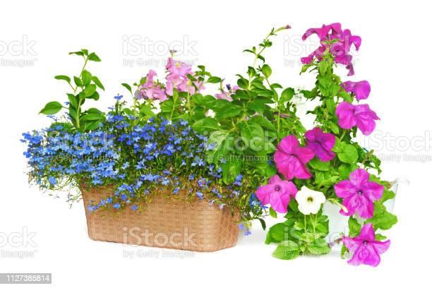 Flower arrangement picture id1127385814?b=1&k=6&m=1127385814&s=612x612&h=efopksi5myk5mqpketmawvyyggr7tiutvagjcjaijj4=