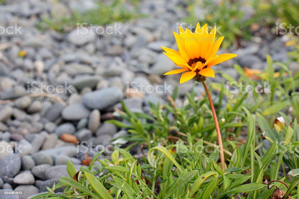 Flower at Napier beach stock photo