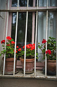 flower at the window