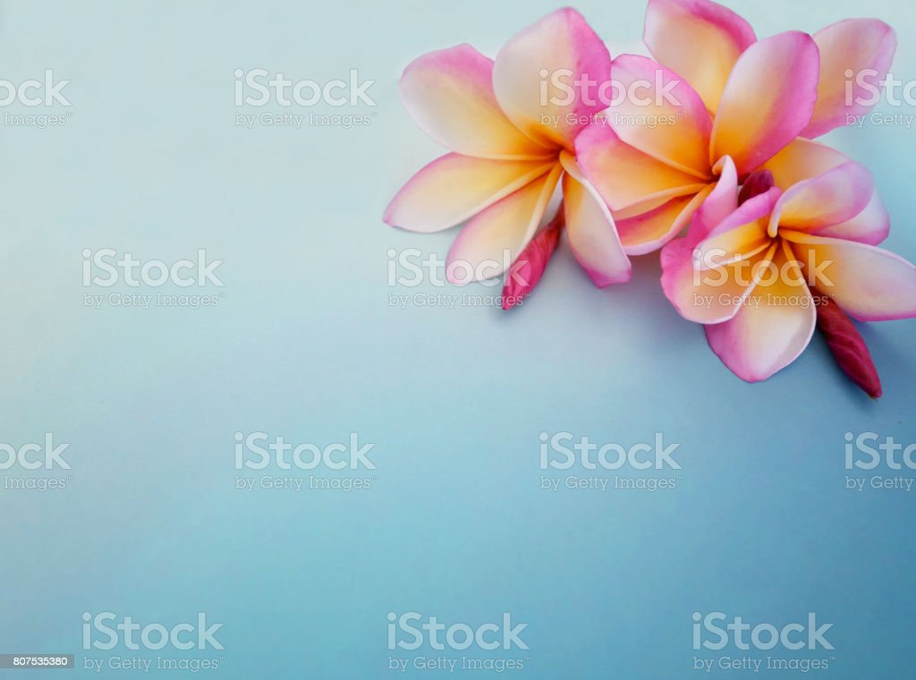 flower background copy space stock photo