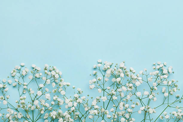Flower background for holidays. Flat lay style. Copy space. Vintage. - foto de stock