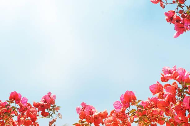 Flower background stock photo