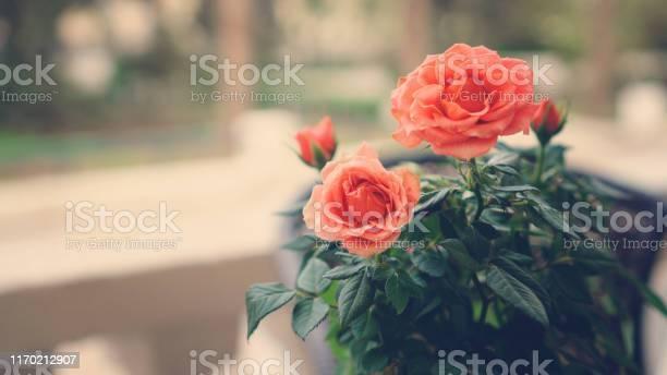 Flower background picture id1170212907?b=1&k=6&m=1170212907&s=612x612&h=8gb2tycyyomi1c2cid1legzdkwtqabhhrx1 ujdtjs0=