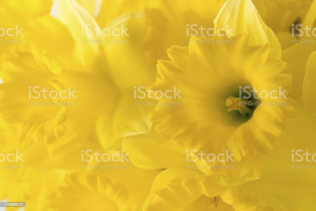 Flower background stock photo