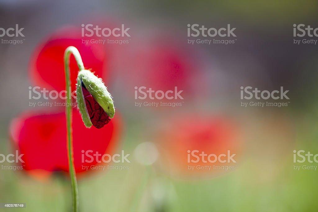 Blume Hintergrund Lizenzfreies stock-foto