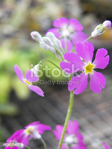 istock flower background 492625407