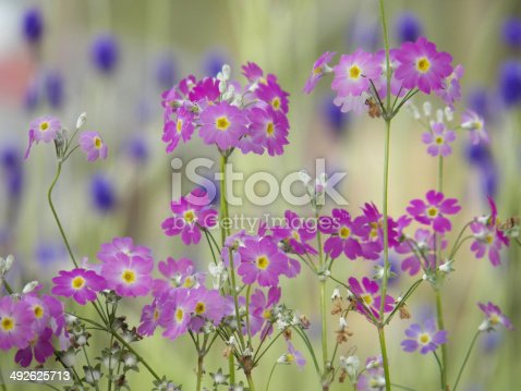 istock flower background 492625713