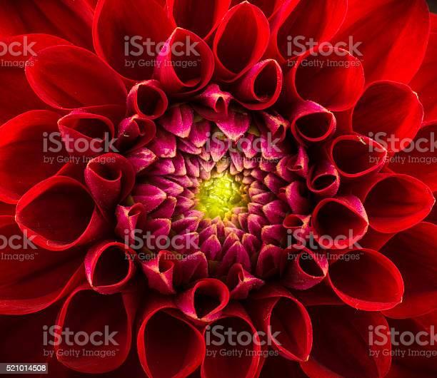 Flower background picture id521014508?b=1&k=6&m=521014508&s=612x612&h=vgczq7hqq2eqhvrc2xrz1yi uo56fmrjwvxkktgv1jq=