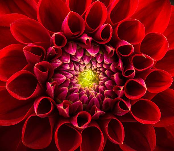 花の背景 ストックフォト
