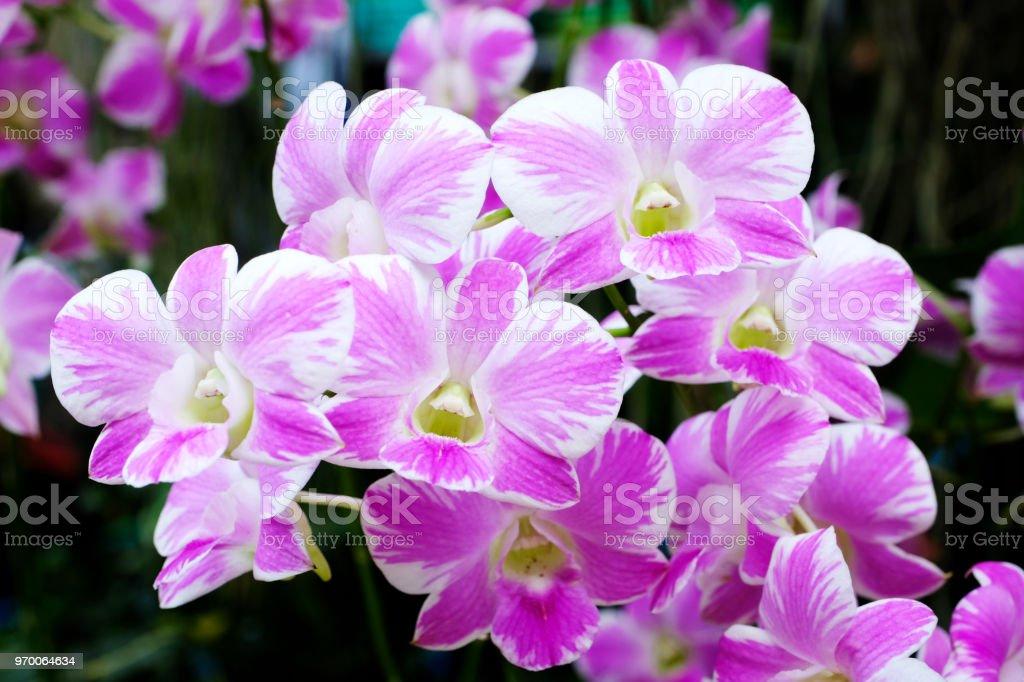 Fond De Fleur Fleur De Fleurs Bouquet Orchidee Rose Et Blanc En Fond