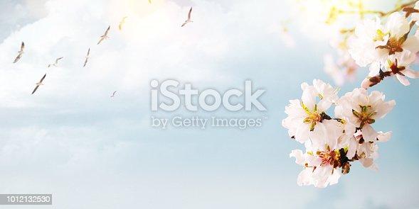 Flower background, Spring concept. Easter