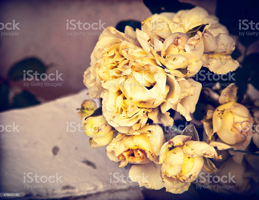 flower background with white roses,wedding card stock photo