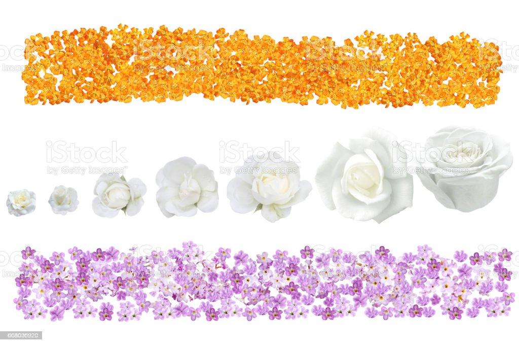 Flower Banner stock photo