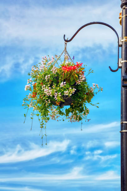 Flower basket hanging from a street lamp post against a blue sky picture id1159955421?b=1&k=6&m=1159955421&s=612x612&w=0&h=6qetalfni6  hj0dros2jprxooiuc0paqxf4qgnnris=