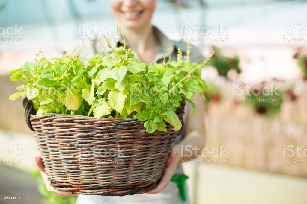 Flower basket in florist's hands stock photo