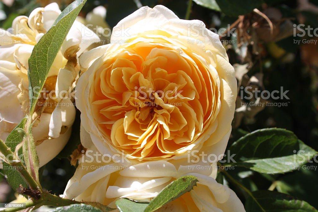 flower beauty stock photo