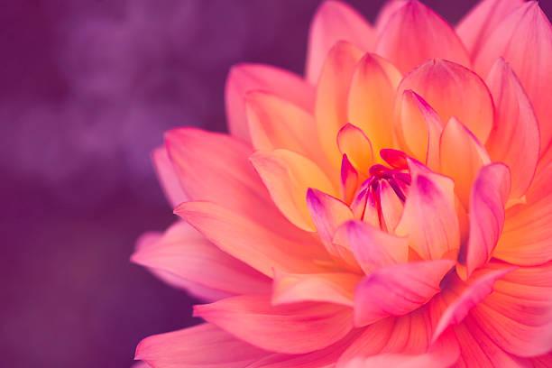 Flor de beleza - foto de acervo