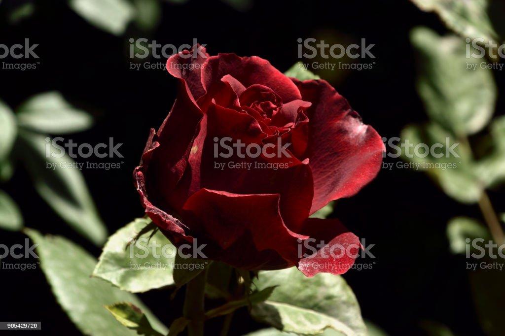 Flower Beauty zbiór zdjęć royalty-free