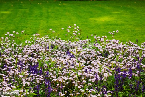 Flower bed with mixed flowers of blue and purple. Oslo, Norway.
