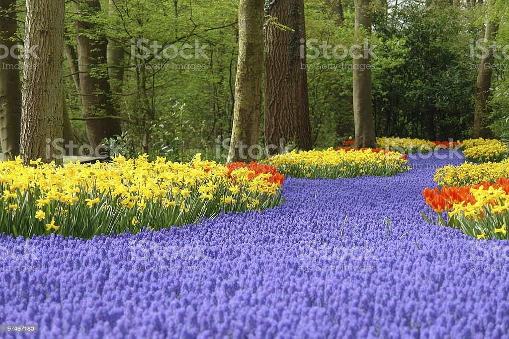 Flower bed full of purple and yellow spring flowers stock photo