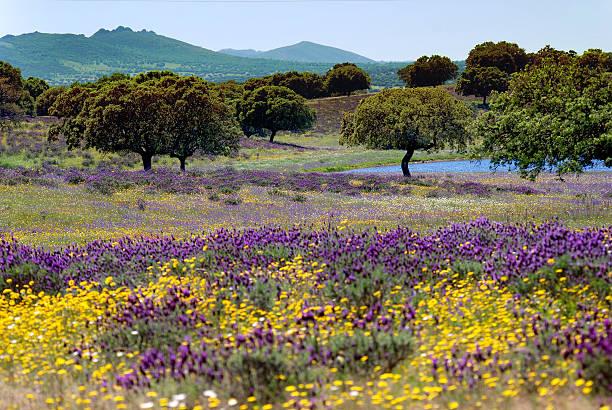 Cama con flores en un paisaje español - foto de stock