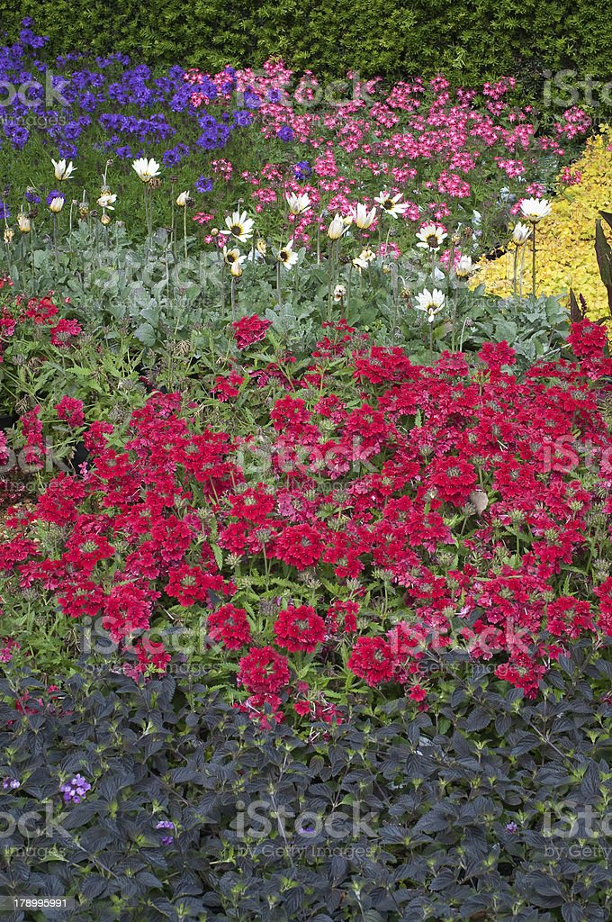 Flower bed in blooming garden royalty-free stock photo