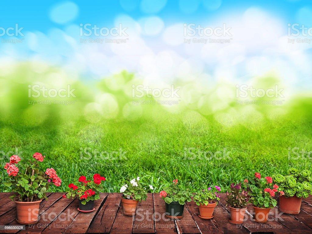 flower bed in the garden photo libre de droits