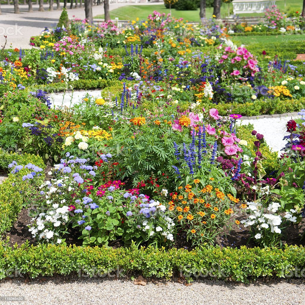 flower bed in the summer park royalty-free stock photo