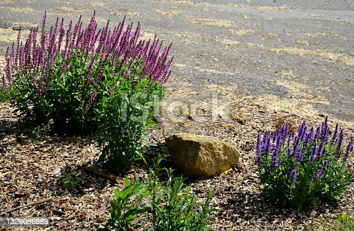 istock flower bed of colorful prairie flowers in an urban environment attractive to insects and butterflies, mulched by gravel. on the corners of the essential oil large boulders against crossing the edge 1326086889