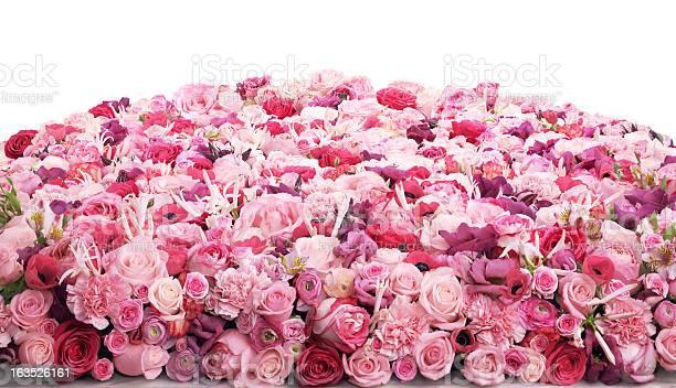 Flower bed picture id163526161?b=1&k=6&m=163526161&s=612x612&h=jf5agtprdv numhppfsuvjv ziknsxmn0ki  u9fw38=
