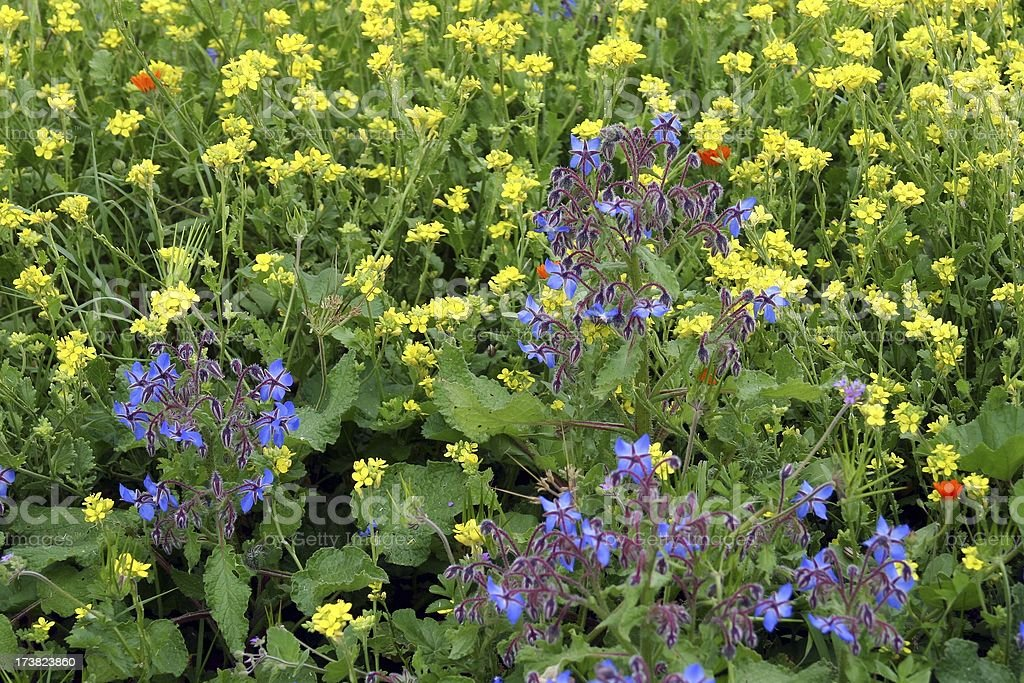 Flower bed royalty-free stock photo