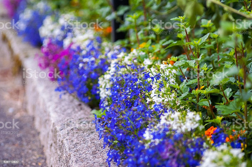 Flower bed Flowerbed with blue and pink flowers at the edge of a road. At The Edge Of Stock Photo