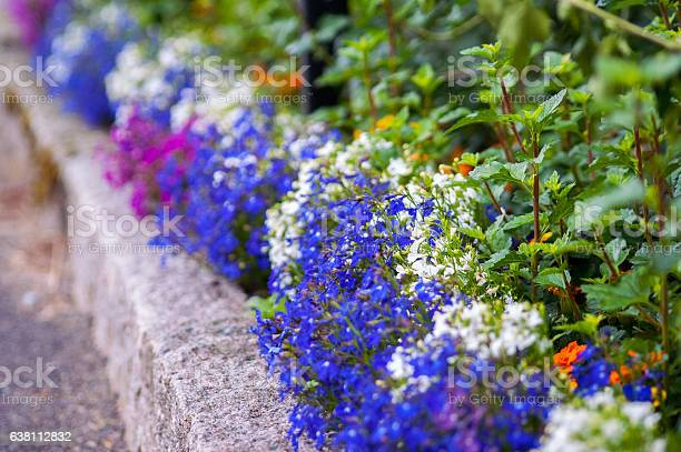 Flower Bed Stock Photo - Download Image Now