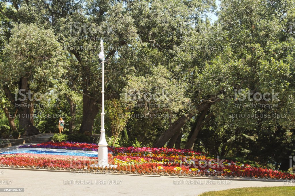 Flower bed under the trees. royalty-free stock photo