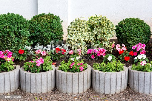 flower bed with leafy bushes and gray stone flowerpots with a blooming petunia, decor of the backyard.