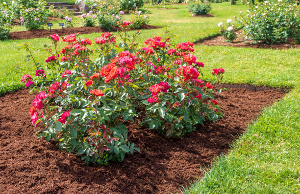 Flower bed with the rose