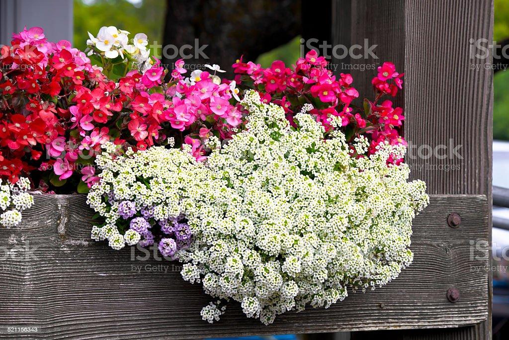Blumenbeete der verschiedenen Arten von Blumen auf Holz-Veranda – Foto