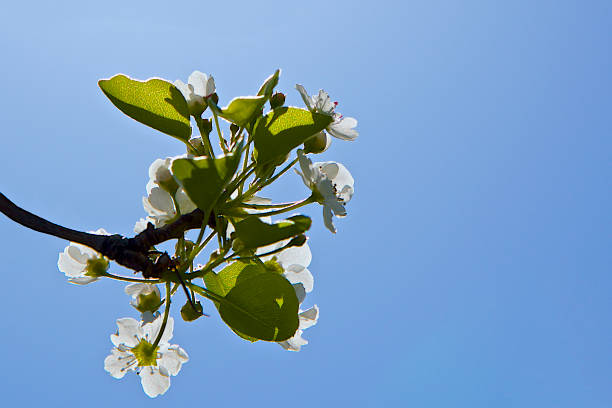 flower bloom in spring time stock photo