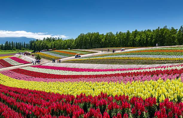 flower blooming in Japan – Foto